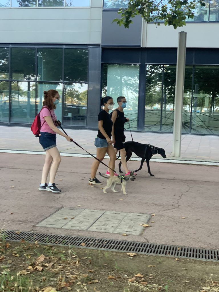 paseo-clases-galgo-mujer